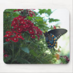 Beautiful Butterfly Mouse Pads