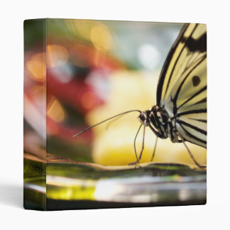 Beautiful Butterfly on a Dish 3 Ring Binder
