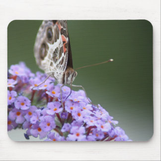 Beautiful Butterfly on butterfly bush Mouse Pad
