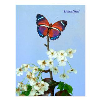 Beautiful Butterfly & Ornimental Pear Bloom Postcard