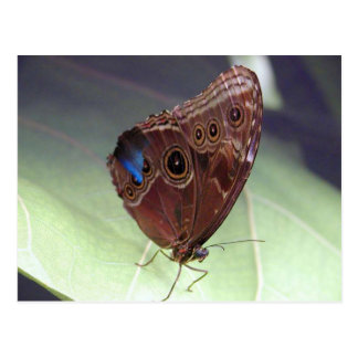 Beautiful Butterfly Photo Post Cards