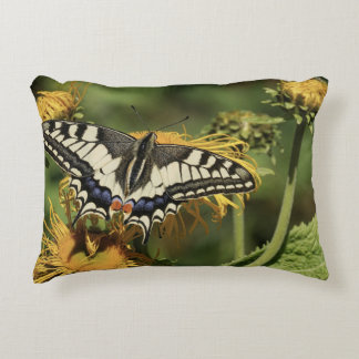Beautiful butterfly pillow to lay your head.