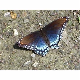 Beautiful Butterfly Pin Photo Sculpture Button