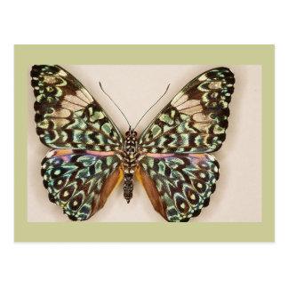 Beautiful Butterfly Postcard