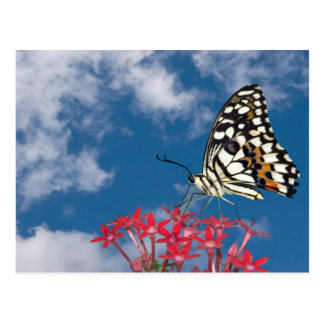 Beautiful Butterfly Postcards