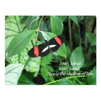 Beautiful butterfly soaring, landing! postcard