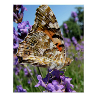 Beautiful Butterfly with Colourful Wings Photo Poster