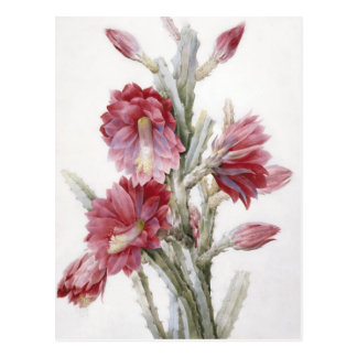 Beautiful Cactus Bloom Watercolor Art Postcard