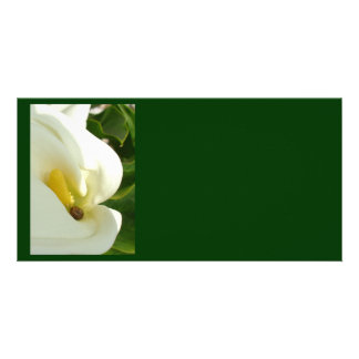 Beautiful Calla Flower On Green Natural Background Card