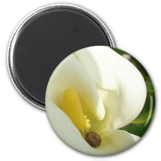 Beautiful Calla Flower On Green Natural Background Magnet