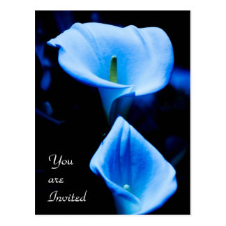 Beautiful Calla Lilies Pair Bathed in Blue Light Postcard