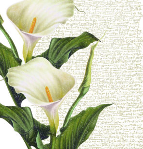 Beautiful Calla Lilies Shower Curtain