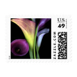 Beautiful Calla Lily Mulit-color Stamp