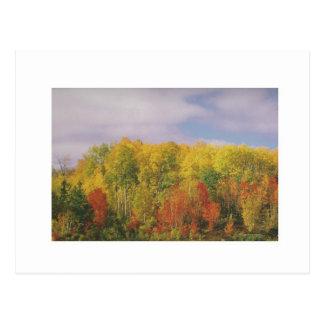 Beautiful CANADIAN Fall Season : LOWPRICE GIFTS Postcard