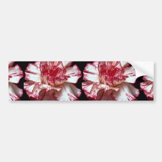 Beautiful Candy-striped carnation Bumper Sticker