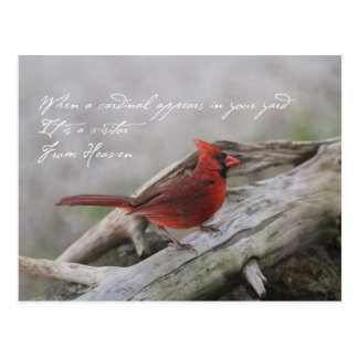 Beautiful cardinal with saying postcard