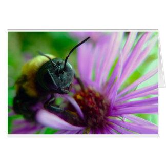 Beautiful Carpenter Bee Card