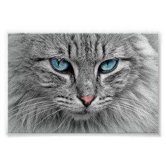 beautiful cat close up poster