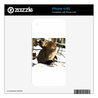BEAUTIFUL CAT DECALS FOR iPhone 4S