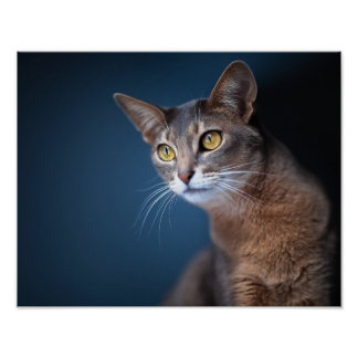 Beautiful Cat Face Value Poster Paper