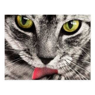 beautiful cat feline eyes and tongue lick postcard