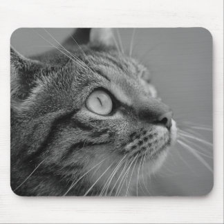 Beautiful cat mouse pad
