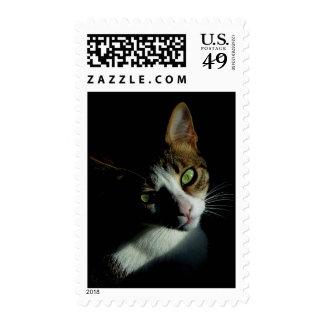 Beautiful Cat postage