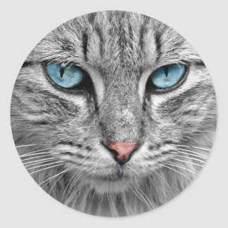 Beautiful Cat with Blue Eyes Classic Round Sticker