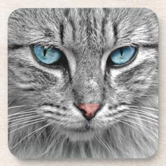 Beautiful Cat's Blue Eyes