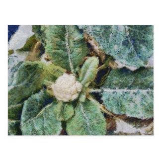 Beautiful cauliflower postcard