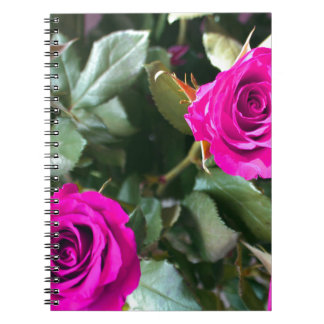 Beautiful cerise coloured Roses Spiral Notebook