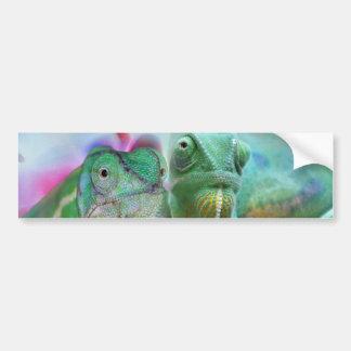 Beautiful chameleons bumper sticker