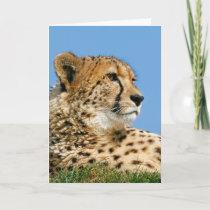 Beautiful Cheetah - Greeting Card