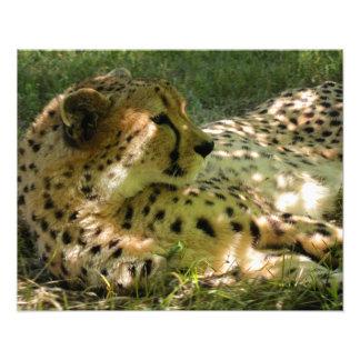 Beautiful Cheetah Photograph