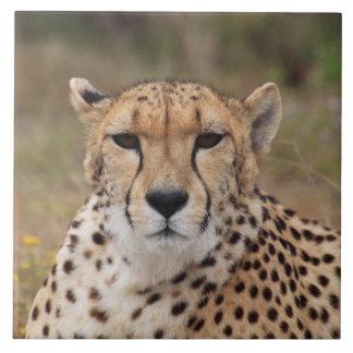 Beautiful cheetah portrait tiles