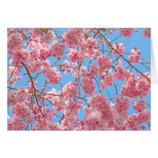 Beautiful Cherry Blossom Greeting Card