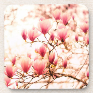 Beautiful Cherry Blossoms - Central Park Beverage Coaster