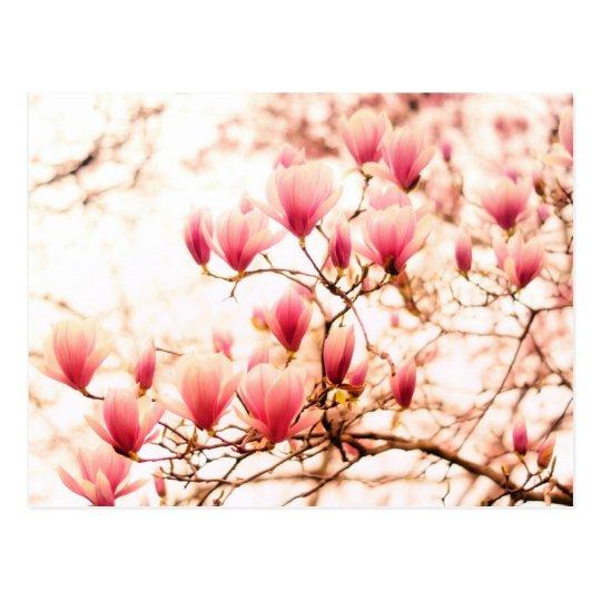 Beautiful Cherry Blossoms - Central Park Postcard