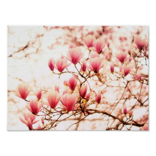 Beautiful Cherry Blossoms - Central Park Poster
