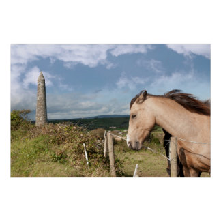 beautiful chestnut and black Irish horses Poster