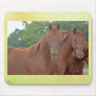Beautiful Chestnut Bay Brown Horses Mouse Pad