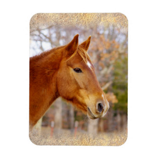 Beautiful Chestnut Horse Magnets