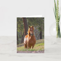 Beautiful chestnut horse photo blank card