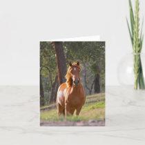 Beautiful chestnut horse photo blank card