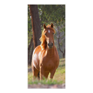 Beautiful chestnut horse photo bookmark custom rack card