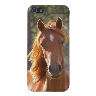 Beautiful chestnut horse photo iphone 5c case