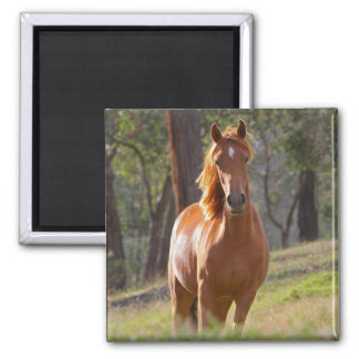 Beautiful chestnut horse photo portrait, gift 2 inch square magnet