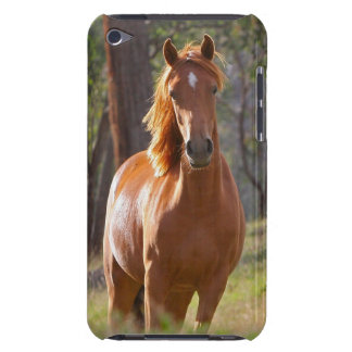 Beautiful chestnut horse photo portrait, gift iPod touch case
