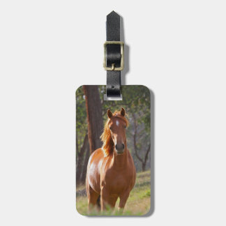 Beautiful chestnut horse photo portrait, gift tags for luggage