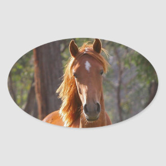 Beautiful chestnut horse photo portrait, gift oval sticker